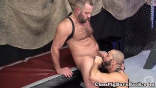 Dicksucking bald bear gets unsaddled